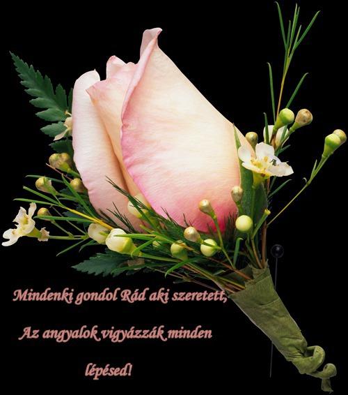 www.tvn.hu_9fe8d66632ec51567fe3f1d6f47fe47e