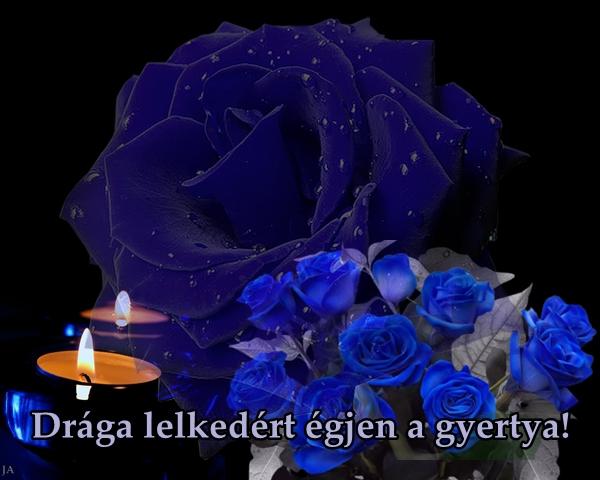 egjen_a_gyetya_a_lelkedert_1345552_2653_1678704_8312